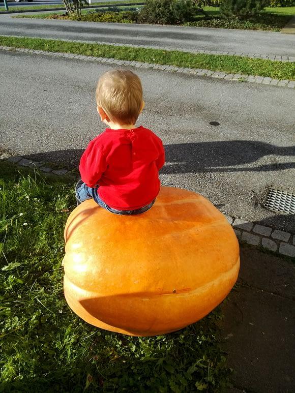 Über Uns - Kind sitzt auf Kürbis