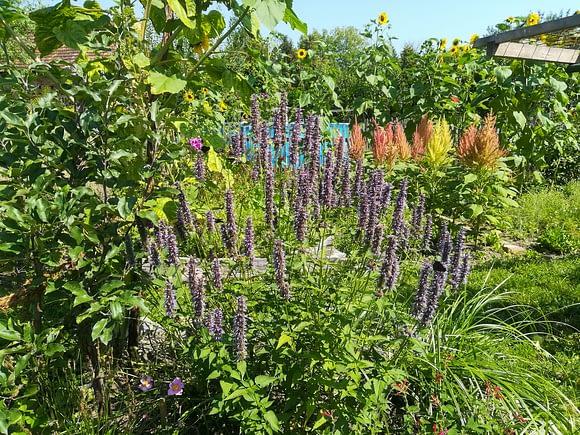 Über Uns - Wiese mit Sonnenblumen