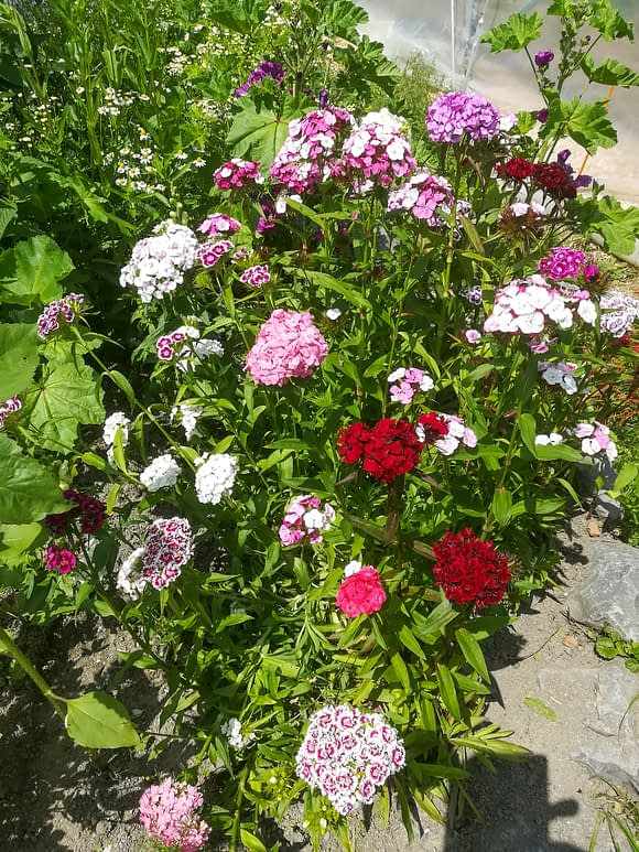Über Uns - Blumen im Garten